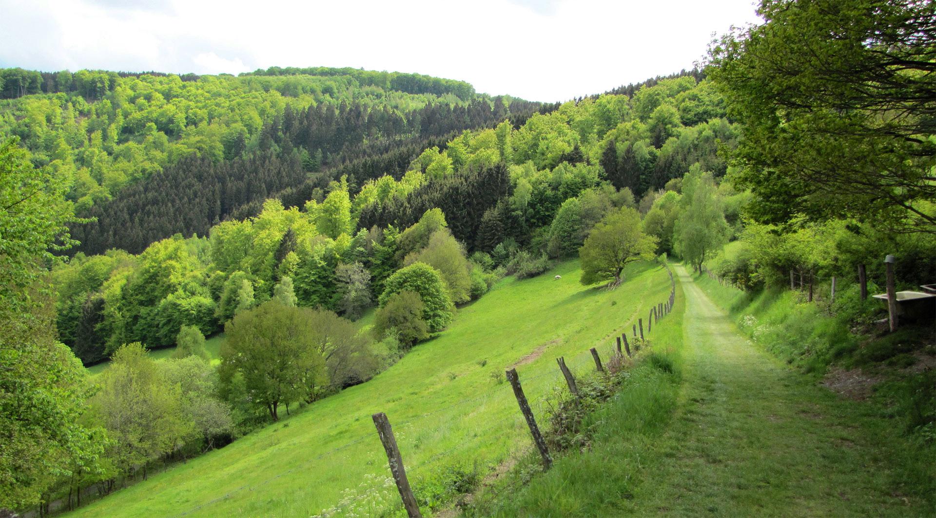 Klettersteig Ardennen : Ardennen camping bertrix aktivitäten bestcamp